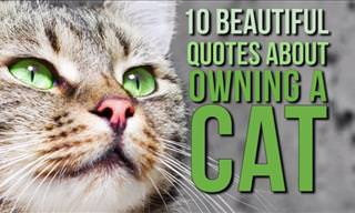 10 Beautiful Quotes About Owning a Cat