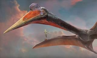 All About the Mighty Pterosaurs