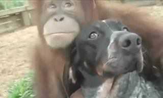 These Inter-Species Friendships Melted My Heart...