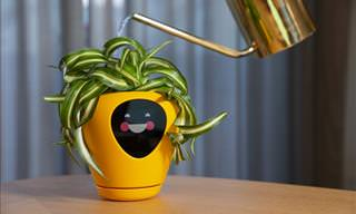 What If Your Plants Could Tell You When They're Thirsty?