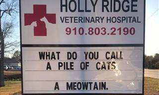 25 More Pet Jokes Courtesy of Hilarious Veterinary Clinics