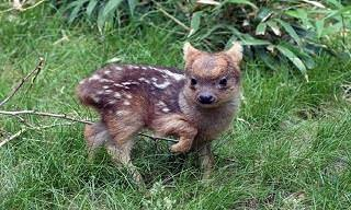 Feast Your Eyes Upon These Adorable Rare Baby Animals
