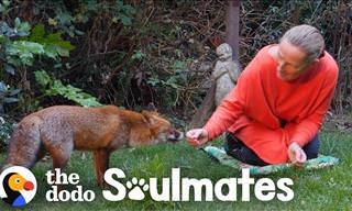This Woman Befriended an Untamable Animal in Her Yard