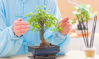 How to Maintain the Perfect Bonsai Tree