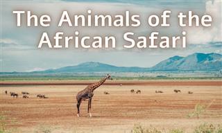 The Safari Animal Quiz