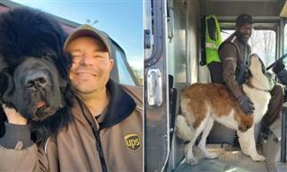 12 UPS Drivers Taking Pictures With Adorable Dogs