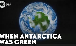 Did You Know That Once Upon a Time Antarctica Was Green?