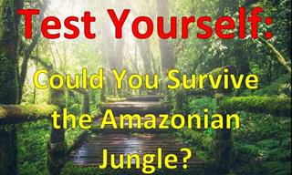 Quiz: Can You Survive in the Jungle?