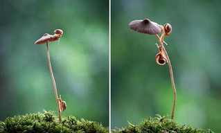 The Mushroom World of Vyacheslav Mishchenko