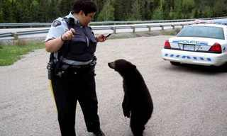 Being a Cop isn't All  Drama - Funny Photos!