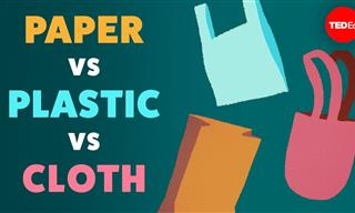 Paper, Plastic or Cloth - What Kind of Bag Should We Use?
