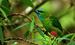 15 Gorgeous and Colorful Birds That Are Endemic to Borneo!