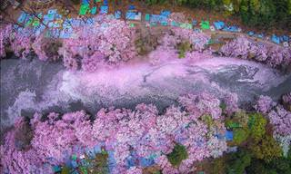 The Stunning Springtime Sights of Japan