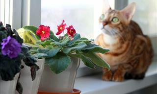 How to Keep Cats Away from Indoor Plants