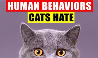 18 Common Human Behaviors That Upset or Harm Cats