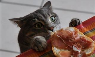 Some Cat Burglars Only Have Eyes for Your Delicious Supper