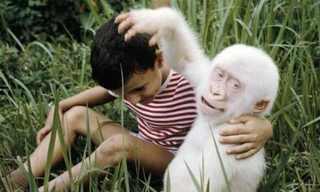 Amazing Photos of Albino Animals!
