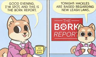 Comics Fun: The Dogs Have Opened a News Network!