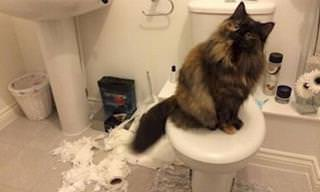 15 Hilarious Pictures of Cats Being Cats