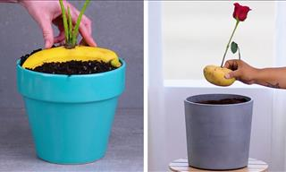 12 Indoor Gardening Hacks You Must Know