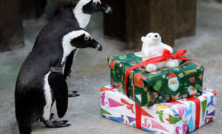 Christmas Comes to the Animals of the London Zoo!