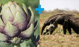 The Enigmatic Animal that Looks Like an Artichoke