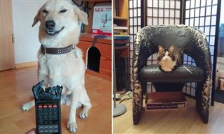 These Cheeky Pets Are Hilariously Funny!