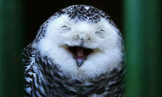 Hilarious Photos of Amused Owls.