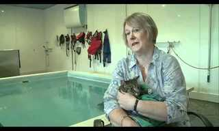 Paralyzed Cat Takes Swimming Lessons!