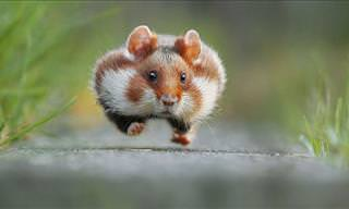 Adorable Photos of Cute Wild Hamsters