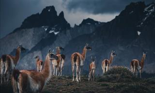 10 Glorious Pictures of Patagonian Nature and Wildlife