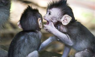 Cute & Hilarious Monkeys