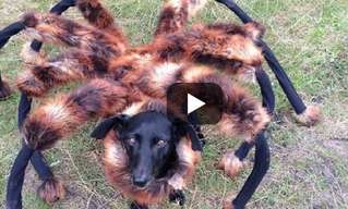 Hilarious: Giant Spider Dog Terrorizes City