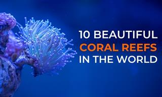 The Beauty of Coral Reefs & the 10 Best Places to Find Them