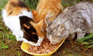 How to Humanely Solve a Stray Cat Problem