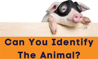 Animal Trivia: Can You Identify the Species?