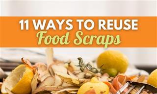 Start Saving Food Scraps - They're Super Useful!