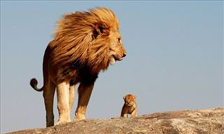 24 Adorable Pictures of Baby Animals & Their Parents