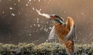 Photographer Takes Unique Action Shots of Animals