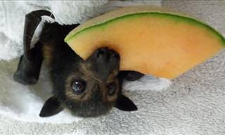 Adorable Bat Photos