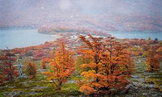 Enchanting Fall Colors in Patagonia, South America