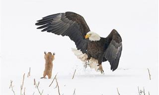 A Sneak Peek at 2021's Comedy Wildlife Photography Awards