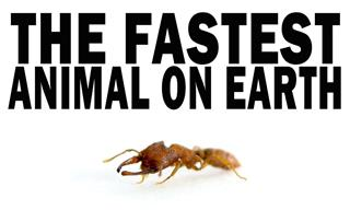 Meet The FASTEST Animal on the Planet