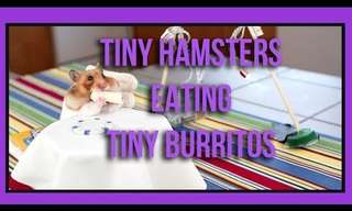 This Tiny Hamster Feast Just Made Me Grin!