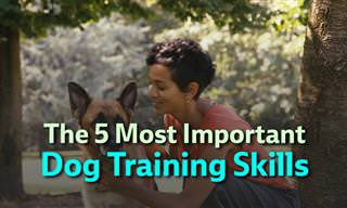 5 Training Skills You Must Teach Your Dog