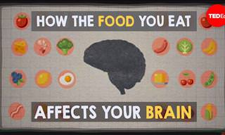 The Effect of the Food You Eat on Your Brain