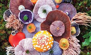 The Magical Beauty of Mushrooms