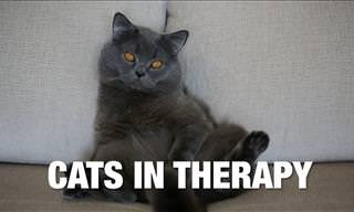 What Happens When Cats Go To Therapy? You Laugh a Lot.