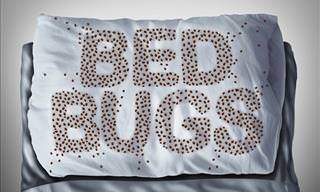How to Prevent and Treat Bed Bug Infestations