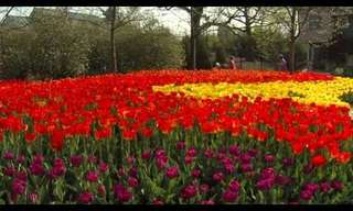 The Tulips Have Come to the Zoo!